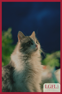 Cat looking urwards