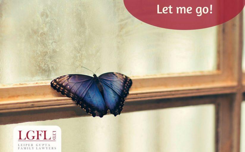 Butterfly behind window